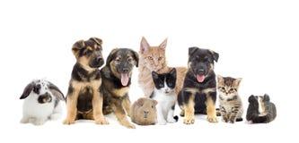 Ställ in husdjur Arkivfoton