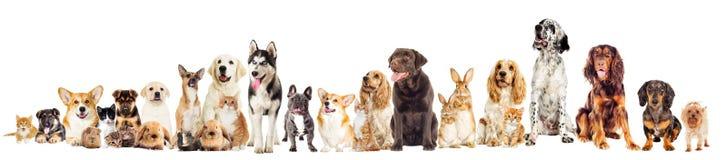 Ställ in husdjur Arkivfoto