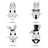 Ställ in huvudet av kaninen Fotografering för Bildbyråer