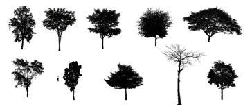 Ställ in inget 1 av den svarta trädkonturn av Thailand isolerade på vit bakgrund royaltyfri illustrationer