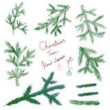 Ställ in julgranen som filialen för dekorerar Royaltyfri Foto