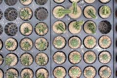 Ställ in kaktuns Fotografering för Bildbyråer