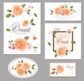 Ställ in kortet med rosor vektor för detaljerad teckning för bakgrund blom- designsammansättning Royaltyfri Foto