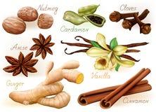 ställ in kryddor vektor illustrationer