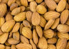 Ställ in mandlar grillade utan naturliga hela korn för skalmodellen av valnötnärbildbakgrund royaltyfri fotografi
