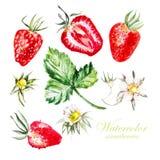 Ställ in med bär och blommor av jordgubben Royaltyfria Foton