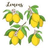 Ställ in med citroner royaltyfri illustrationer