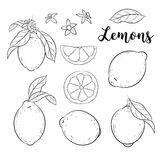 Ställ in med citroner Fotografering för Bildbyråer