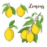 Ställ in med citroner Royaltyfri Foto