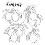 Ställ in med citroner stock illustrationer