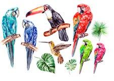 Ställ in med den vattenfärgfåglar, papegojan, tukan och colibri Royaltyfria Bilder
