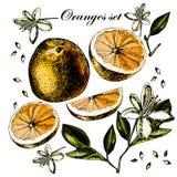 Ställ in med frukt, blommor och sidor av apelsinen Royaltyfri Foto