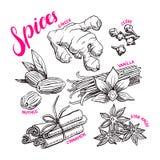 Ställ in med hand-drog kryddor Arkivfoton