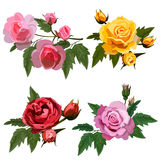 Ställ in med rosor vektor illustrationer