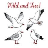 Ställ in med seagulls på isolerad vit bakgrund Arkivfoton