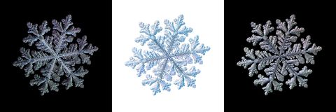 Ställ in med tre varianter av snöflingan som isoleras på svartvita bakgrunder Fotografering för Bildbyråer