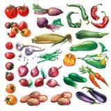 Ställ in samlingen av nya grönsaker Fotografering för Bildbyråer