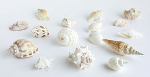 Ställ in samlingen av skal i vit Royaltyfria Bilder