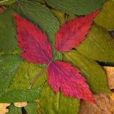 Ställ in torkade sidor av olik färg Royaltyfria Foton