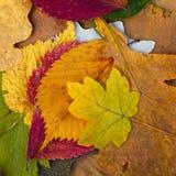 Ställ in torkade sidor av olik färg Arkivfoto