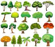 ställ in trees Royaltyfri Bild