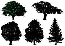 ställ in treesvektorn Arkivfoton