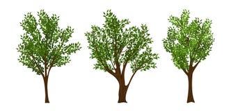 ställ in treesvektorn stock illustrationer