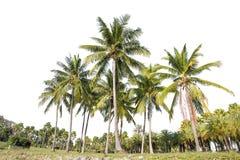 Ställ upp av kokospalmer och palmträd som isoleras på vit bakgrund royaltyfria foton