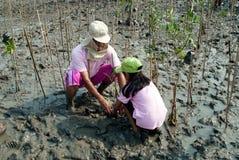 Ställa upp som frivillig familjen som arbetar på unga mangroveträd för växt arkivbild