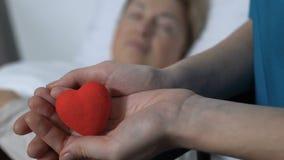 Ställa upp som frivillig rymma leksakhjärta gömma i handflatan in, den sjuka kvinnliga patienten som sover på bakgrund lager videofilmer