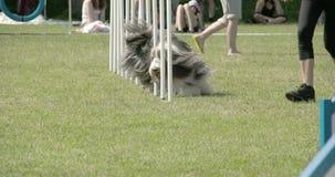Ställa ut hundkapplöpningvighet på odysseyen 7Q för hinder 4K FS700 arkivfilmer