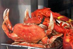 Ställa ut med krabbor Arkivfoto