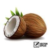 ställde den realistiska isolerade vektorn in 3D av den hela kokosnöten, kokosnöthalvor och palmblad stock illustrationer