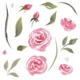 Ställde den utdragna vattenfärgen in för handen av rosa rosor för tappning vektor illustrationer