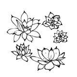 Ställde den utdragna vektorillustrationen in för handen av suckulenta växter för echeveriaen Sikt från den ovannämnda linjära fär stock illustrationer