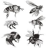 Ställde den utdragna vektorn in för handen av bin, humlan, höga detaljerade kryp för design royaltyfri illustrationer