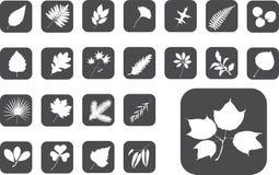 ställde stora leaves in för knappar 1 z Royaltyfri Foto