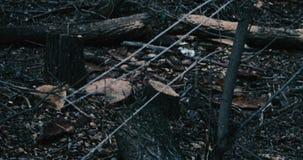Ställe av olagligt logga in skogen lager videofilmer