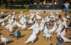 Ställe som trängas ihop av fåglar arkivbilder