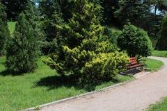 Ställe som vilar med bänken i trädgård Royaltyfria Bilder