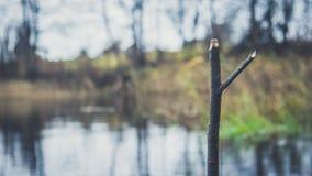 Stället av en fiskare på banken av floden, sjön i hösten bland vasserna Arkivfoton