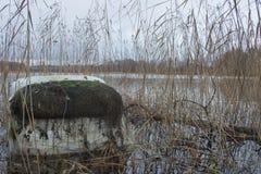 Stället av en fiskare på banken av floden, sjön i hösten bland vasserna Royaltyfria Foton
