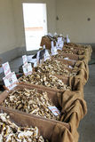 Ställning av en champinjonförsäljare på tryffelmässan av Moncalvo, Italien Arkivfoto