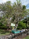 Ställning för liten frukt på Hana Highway i Maui Royaltyfri Foto