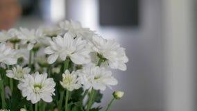 Ställning för vita blommor i en vas i köket lager videofilmer