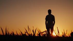 Ställningar för en ung man i ett fält och blickar på solnedgången Royaltyfria Foton