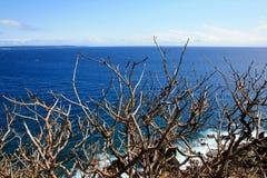 Stämme im Küstenozean Taiwan Lizenzfreies Stockbild