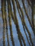 Stämme im Wasser Lizenzfreie Stockfotografie
