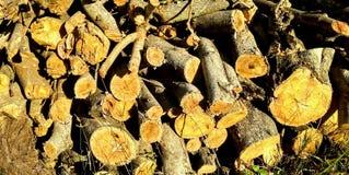 Stämme, Niederlassungen, Brennholz, Holz, Zweige stockfoto