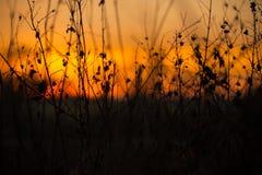 Stämme und Blätter bei Sonnenuntergang Stockfotos